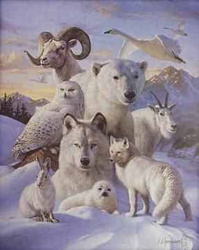 Animal spirit guides pdf